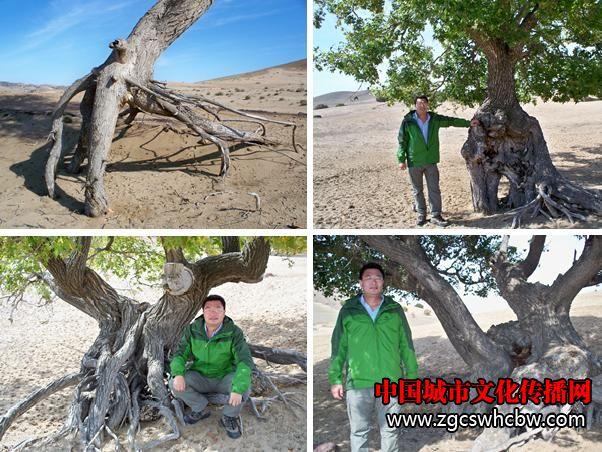 古树4.JPG